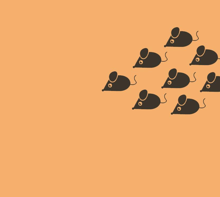 ratones-naranja