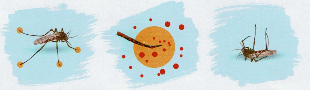 pintura insecticida codaplaga